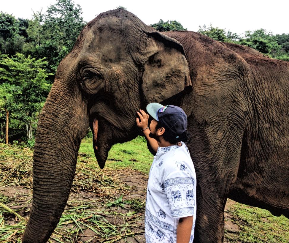 elephant 4.png