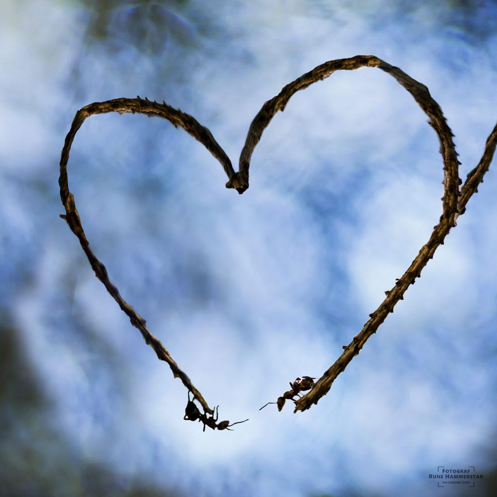 fotograf-oslo-love-fotorune.jpg