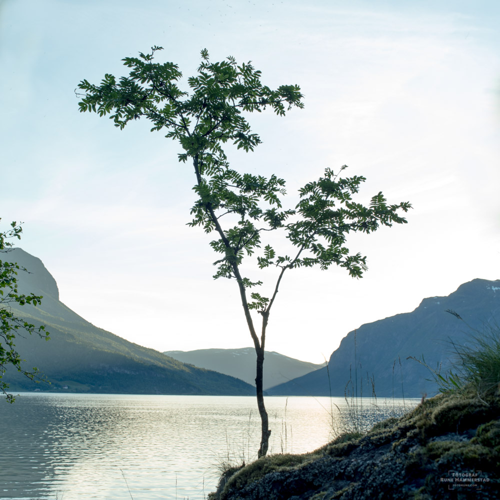 naturbilder-naturfoto-norge-natur.jpg