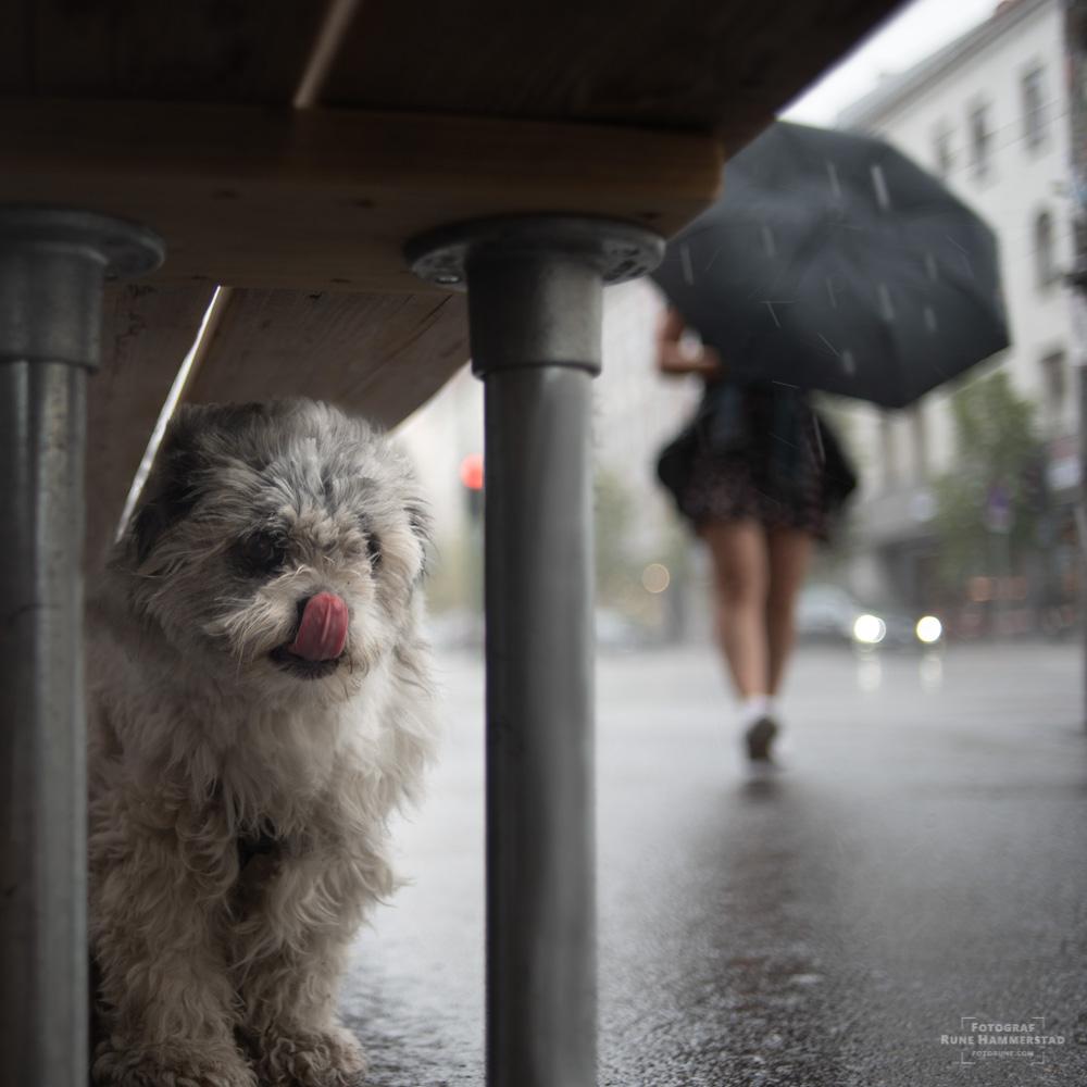 bybilder-oslo-hund-regn.jpg