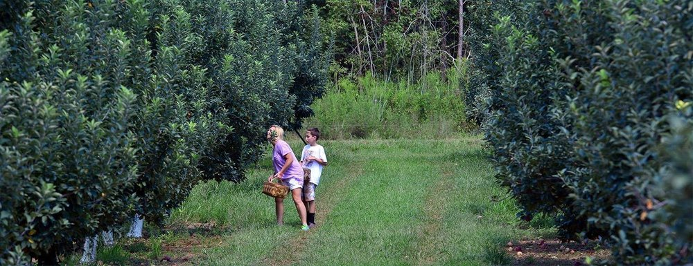Experience the Magic of a Millstone Creek Orchards    U-Pick Adventure -
