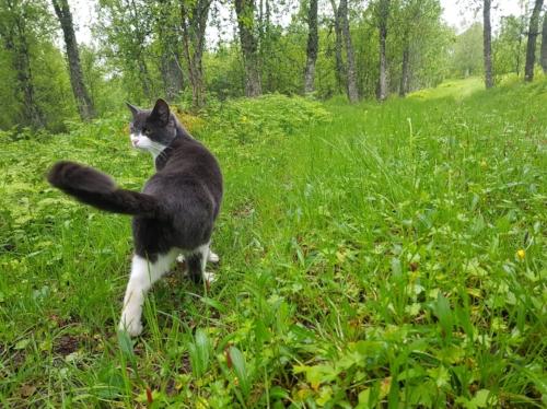 Merida er med på skogtur når mor endelig kommer seg av gårde.