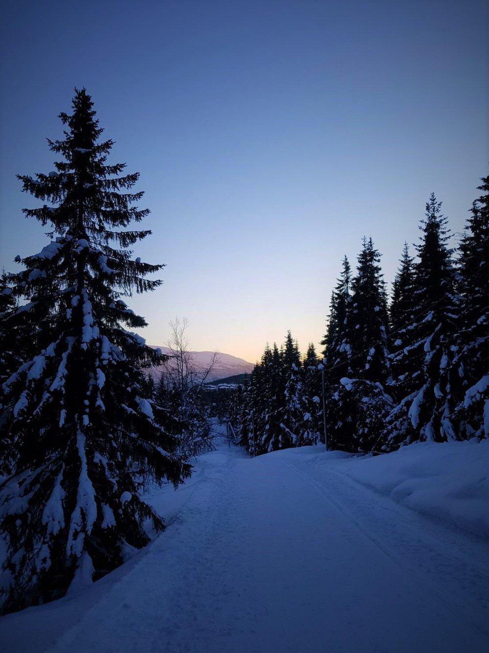 Bløtt januarlys i løypene.