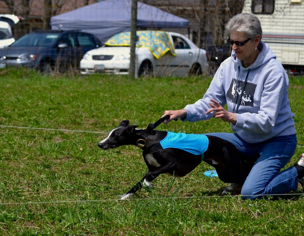 1st Place - Billy, WHIPPET  (photo S Ringuet)