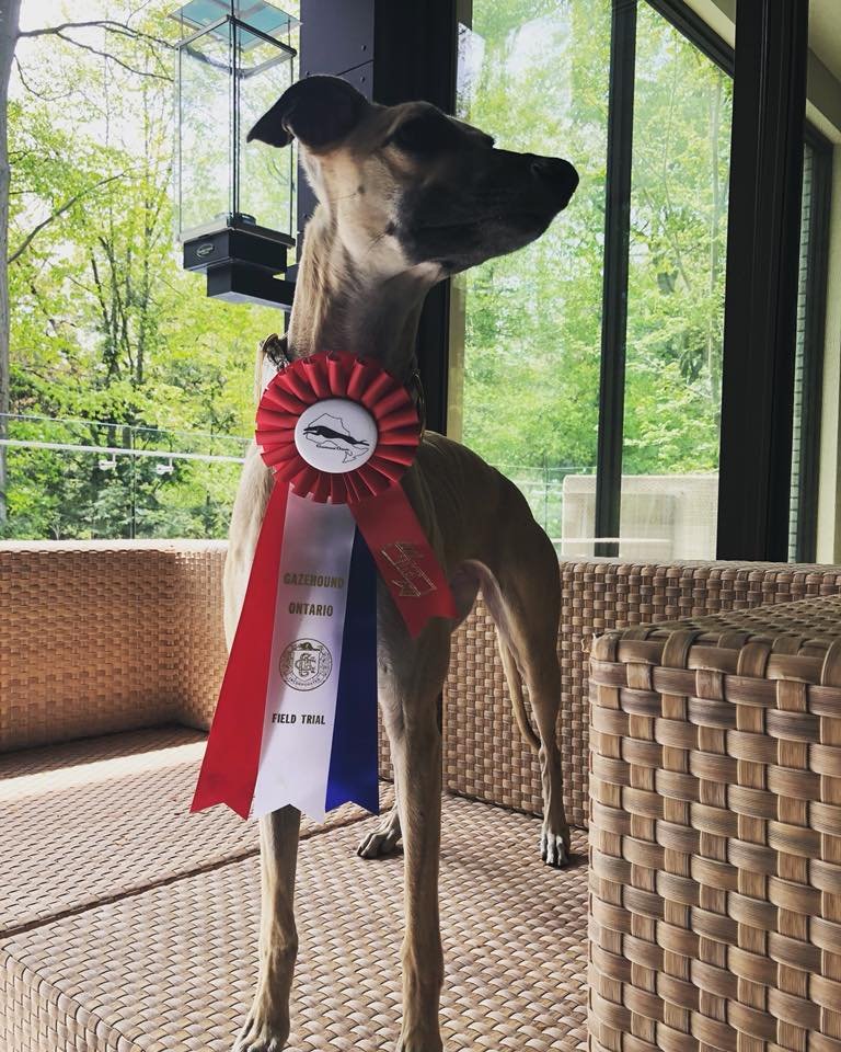 Justice showing off her ribbon  (photo by L Siddons)