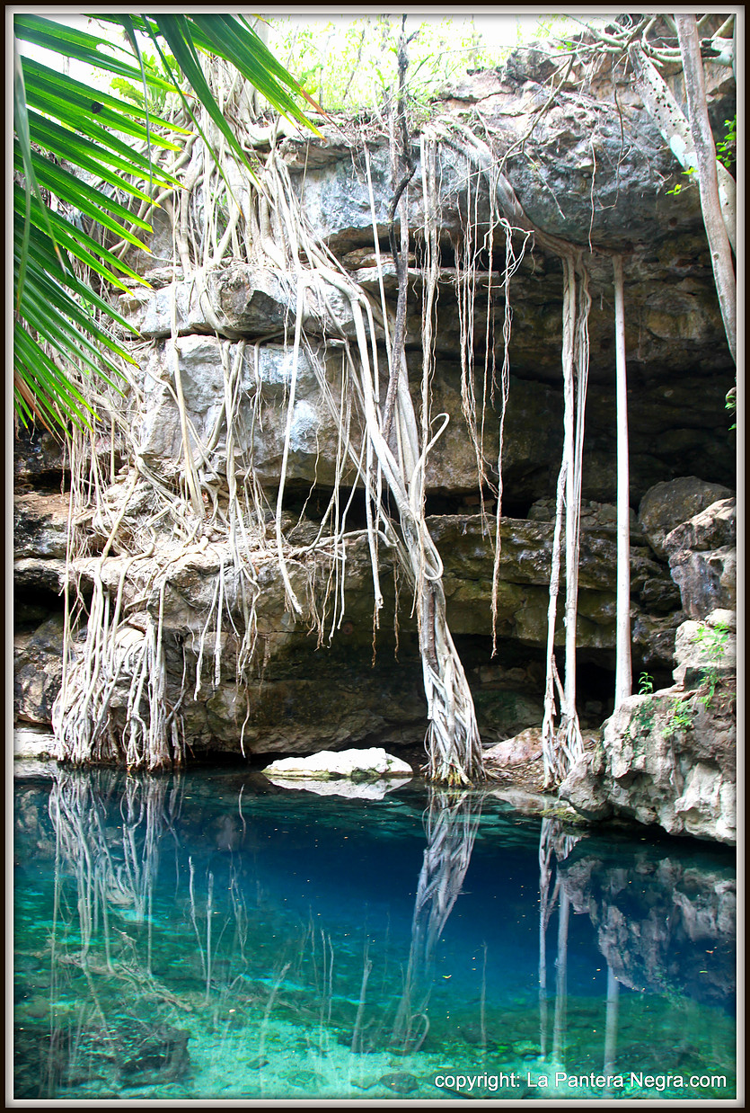 Cenotes - The natural wonders of Yucatan are innumerable. You can go to ecotouristic paradise natural Parc the Celestun or swim in a crystal clear water turquoise color and see the stalactites and stalagmites that from inside the cenotes are true natural works of art.