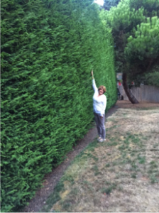 hedge.1.png