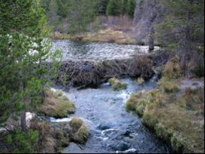 dam.1.png