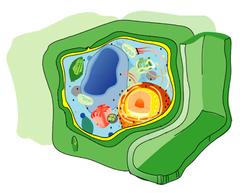 250px-Eukaryota_cell_strucutre.PNG
