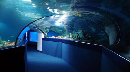 blue-reef-aquarium-portsmouth.jpg