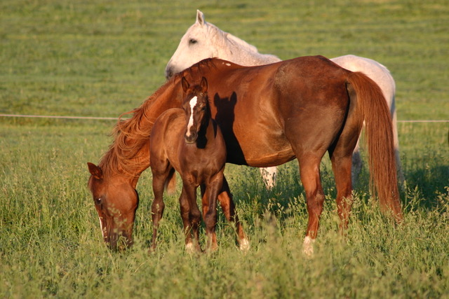 Obligeant with 2007 foal Chameleon, by Emillion