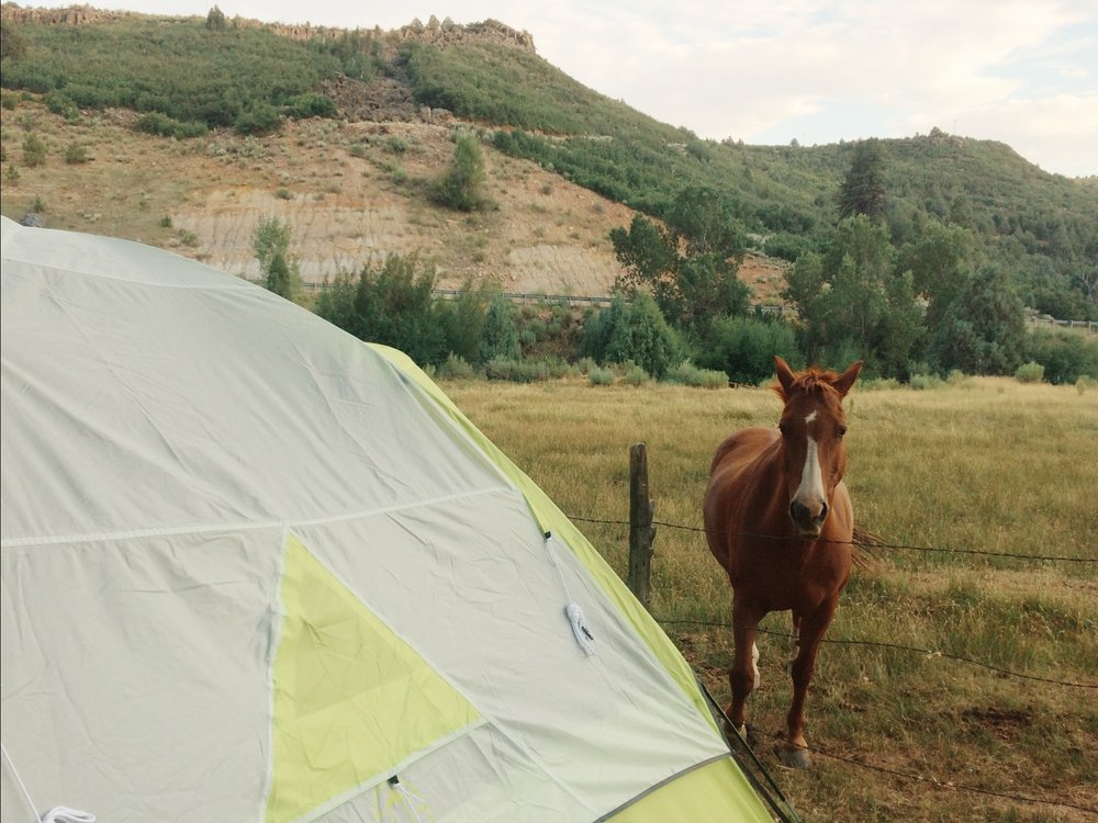 Horses watching us eat our s'mores at the campground