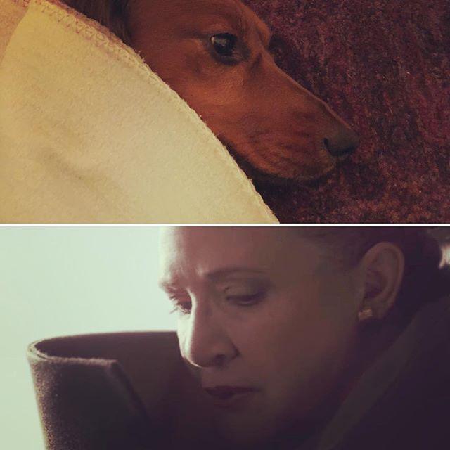 General Molly Organa #thelastjedi #princessleia #dachshundsofinstagram