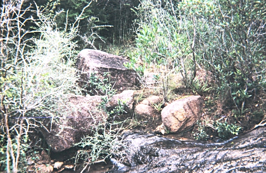 Fast Moving Stream Cobra Just Slipped Back Into the Jungle