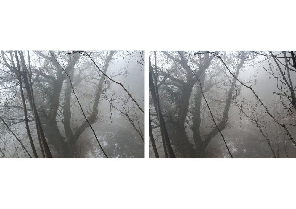 Trees test.jpg