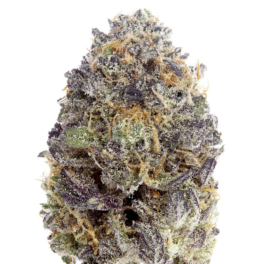 UV Purple_v402142_UVG_$50_NS Studio_03.07.16.jpg