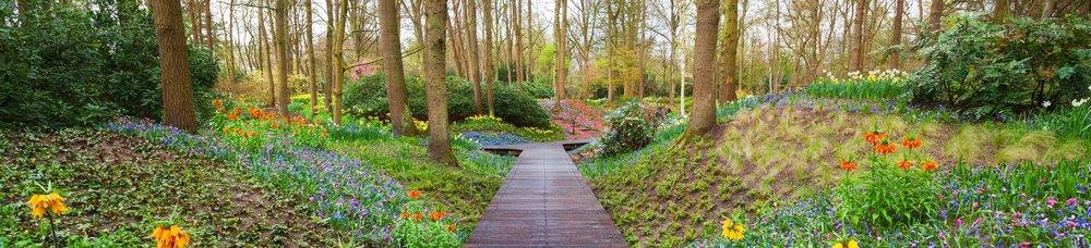 wooden-walkway-park-iStock-537463274 copy.jpg