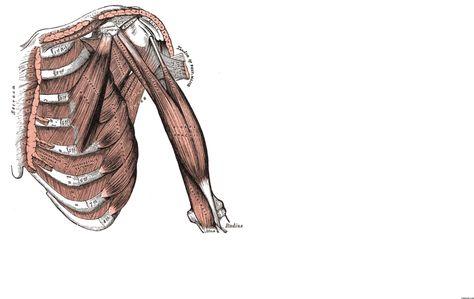 Image of me teaching anatomy