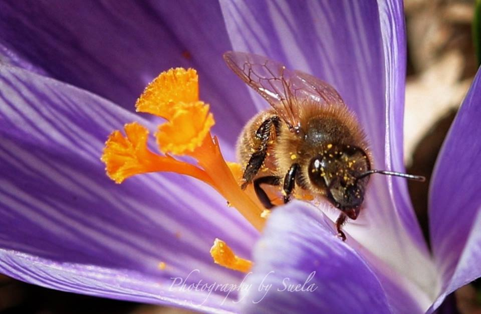 suella-bee.jpg