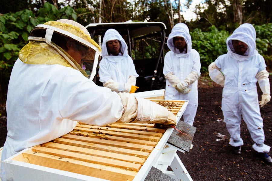 Beekeeping-in-Hawaii-3.jpg