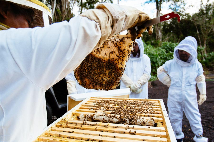 Beekeeping-in-Hawaii-18.jpg