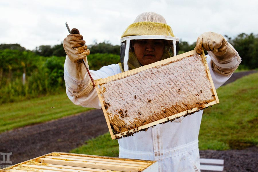 Beekeeping-in-Hawaii-22.jpg