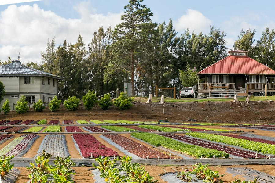 Hirabara-Hawaii-Farms-4.jpg