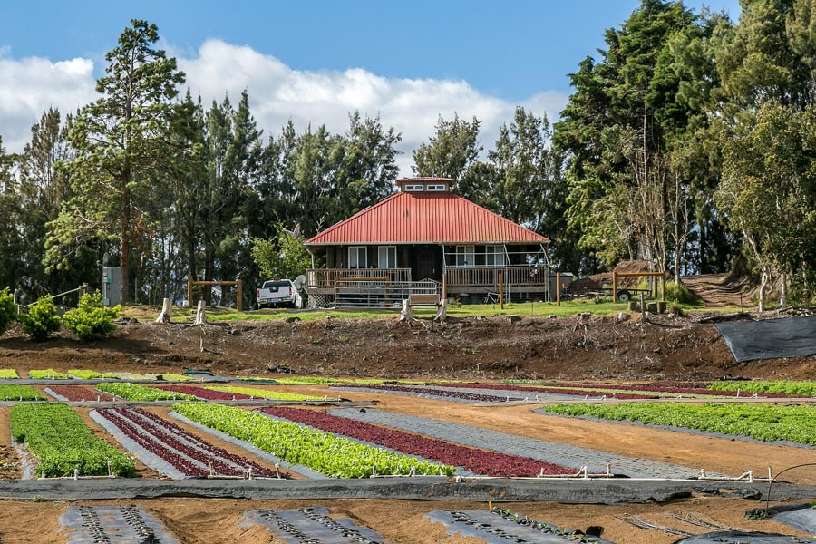 Hirabara-Hawaii-Farms-10.jpg
