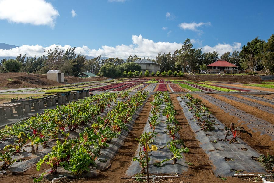 Hirabara-Hawaii-Farms.jpg
