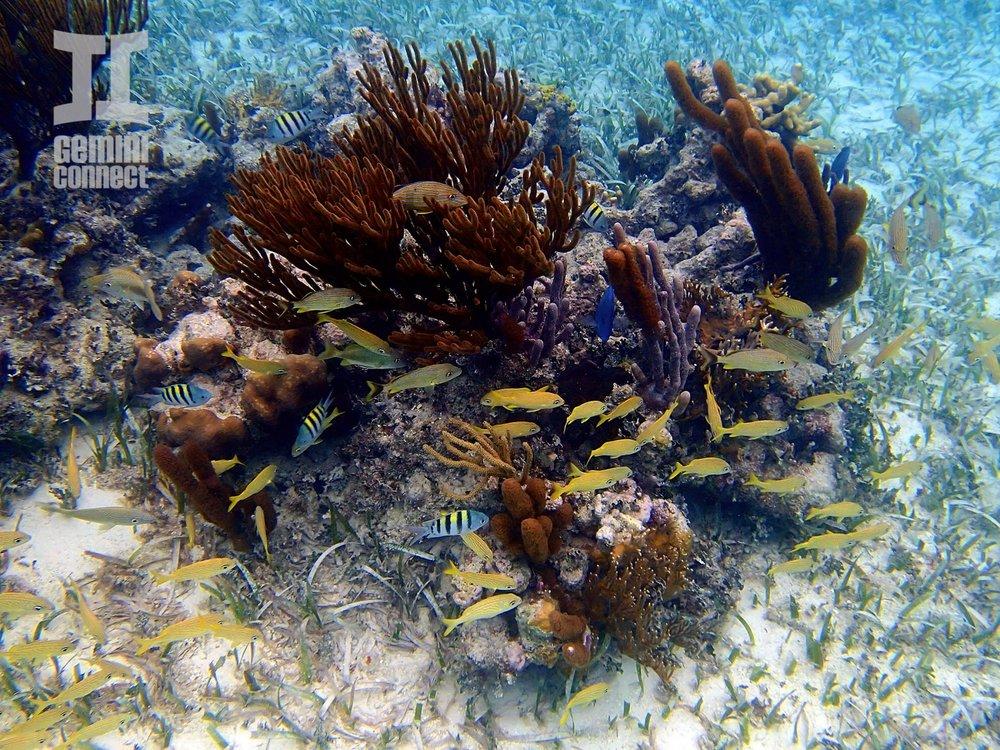 Mexico-Rocks-Snorkeling-12-e1393405020248.jpg