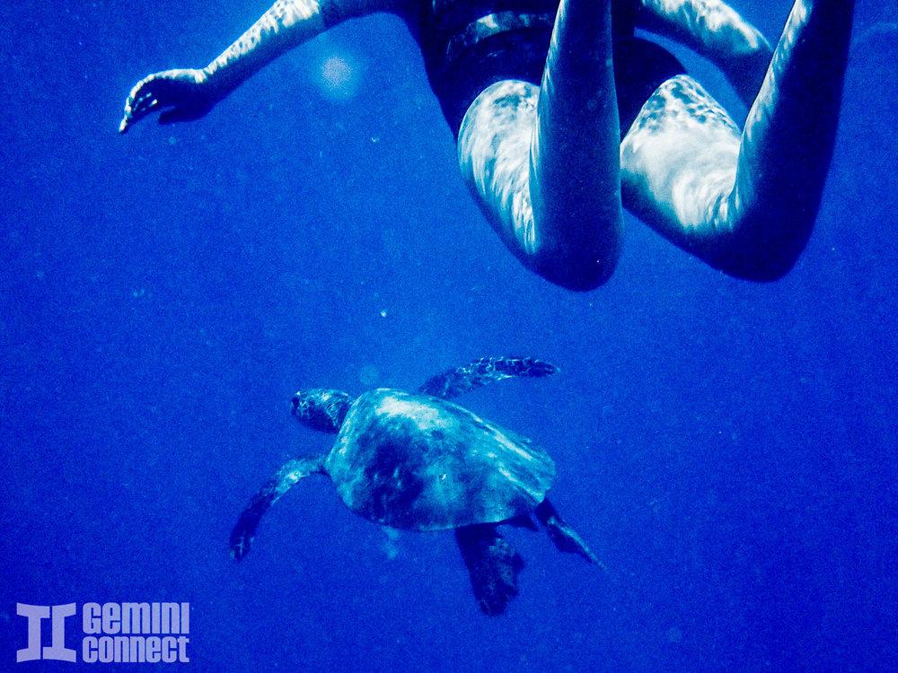 Maui-Hawaii-91.jpg