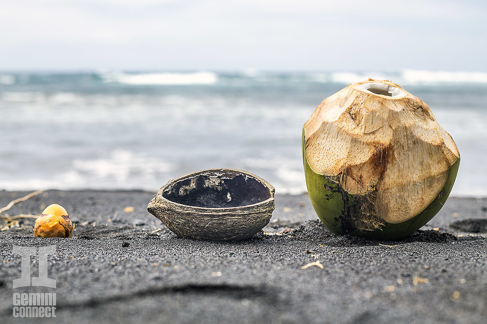 GC-BlackSand-Coconuts-02.jpg
