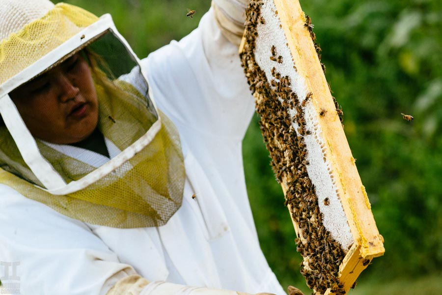 beekeeping in Hawaii honey