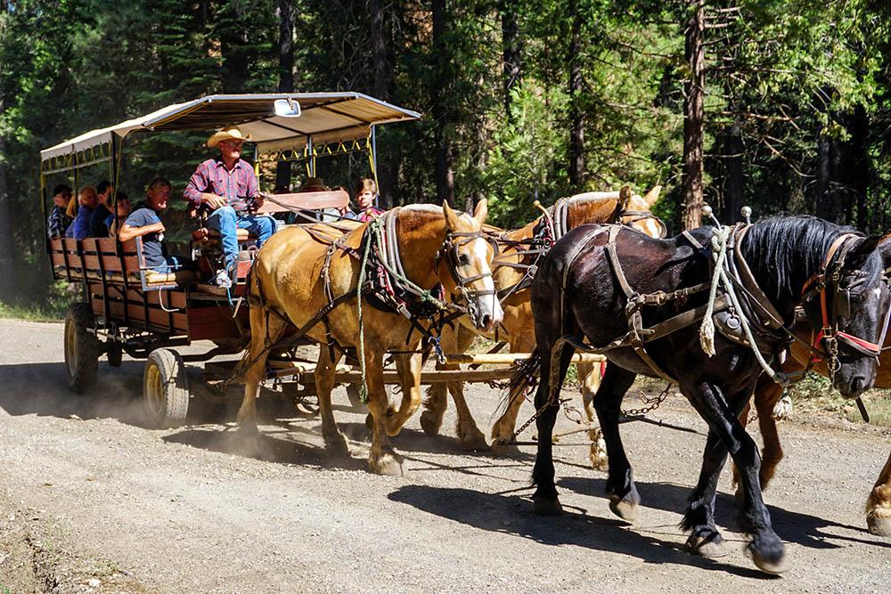 Greenhorn Dude Ranch Horse Riding Vacation