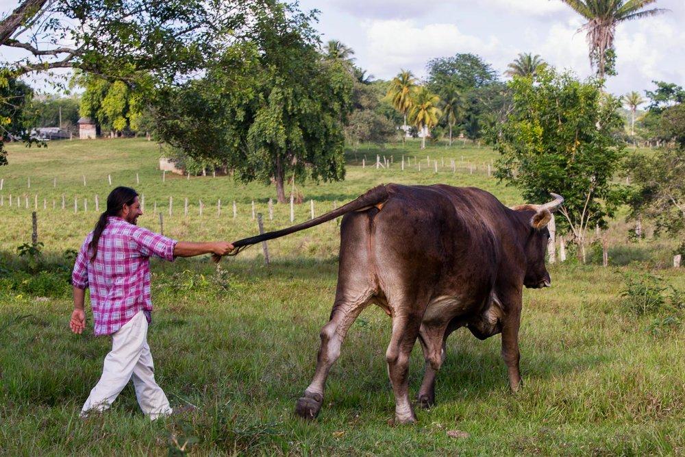 Pratt_Belize-San-Lorenzo-Farm_02.jpg
