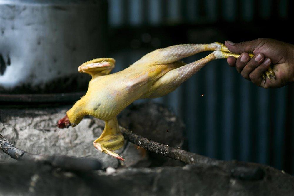 Pratt_Belize-Farm_06.jpg