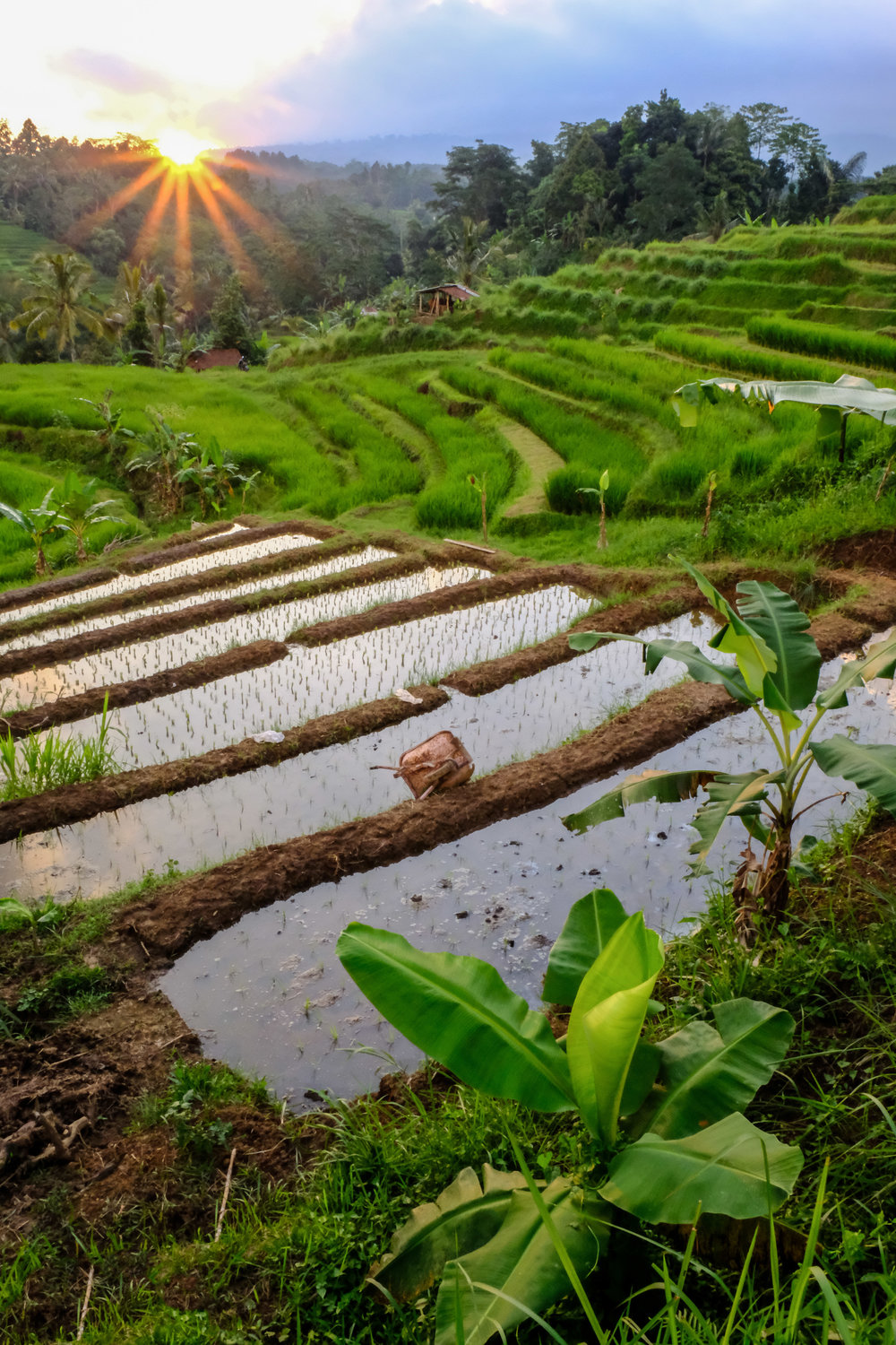 bali-rice-terraces-reflection.jpg