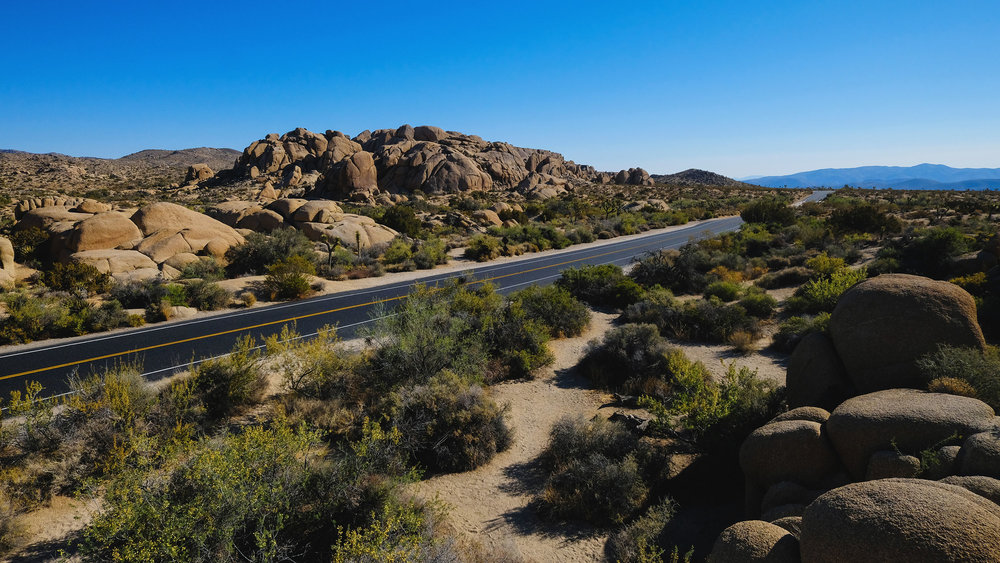 joshua-tree-road.jpg