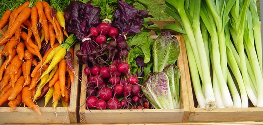 organic-produce-temp.jpg
