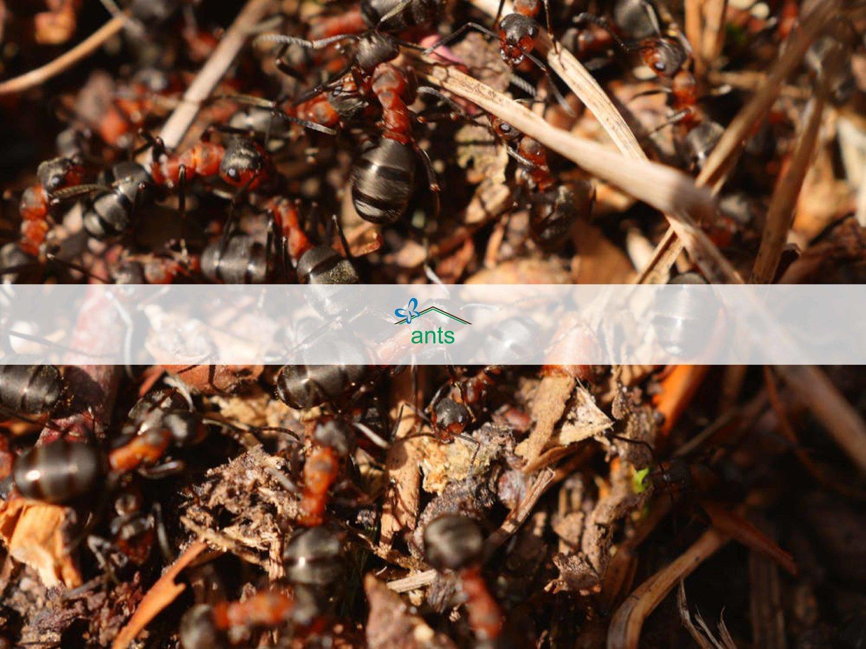 ants — The Neat Freaks