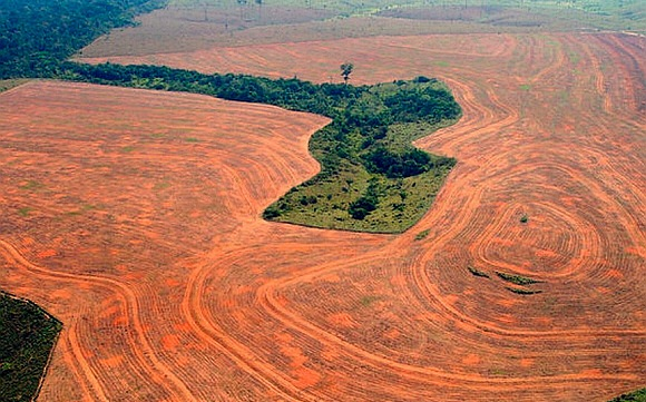 Pocket of degraded rainforest surrounded by lifeless soybean plantations. A decade ago ago this was all pristine rainforest, habitat for over 1000 species of butterfly and 500 species of birds. (photo: Alberto Cesar/Greenpeace/AP)