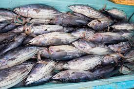 commercialfishing.jpg