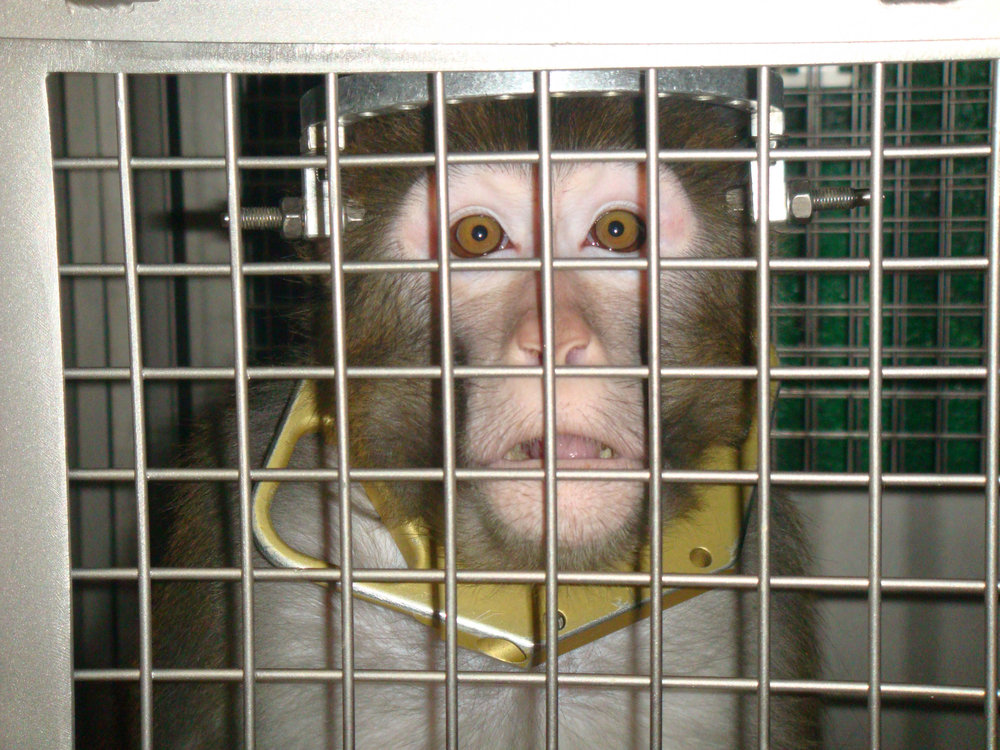 frik-primate-lab.jpg
