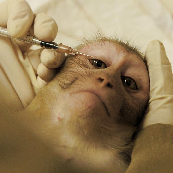animal testing.jpg