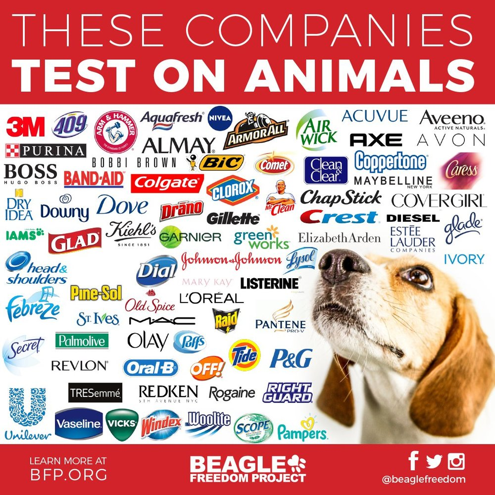 Beagle Freedom Project @ bfp.org