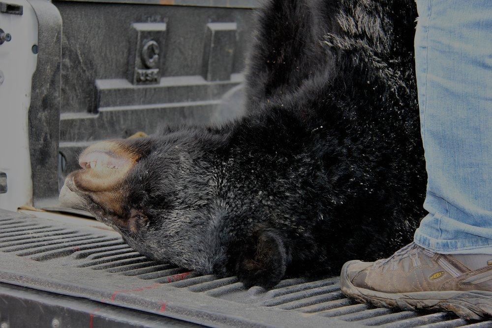 NJ Bear Hunt Protest