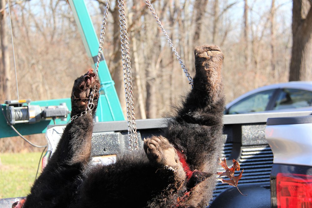 NJ Bear Hunt Protest