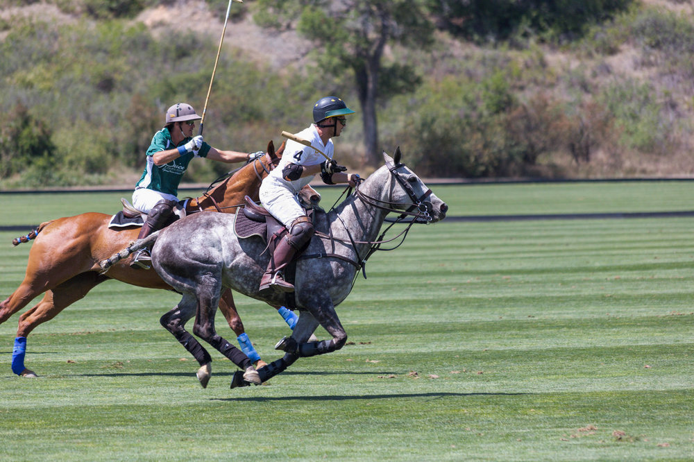 ppp event polo ponies 2.jpg