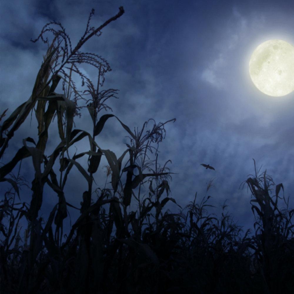 Scary Corn Maze