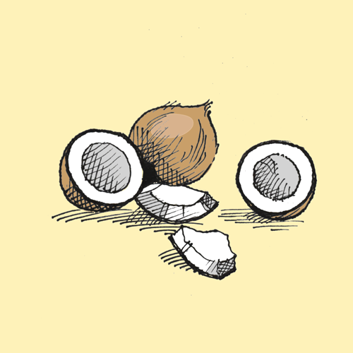 Food illustration of coconuts.